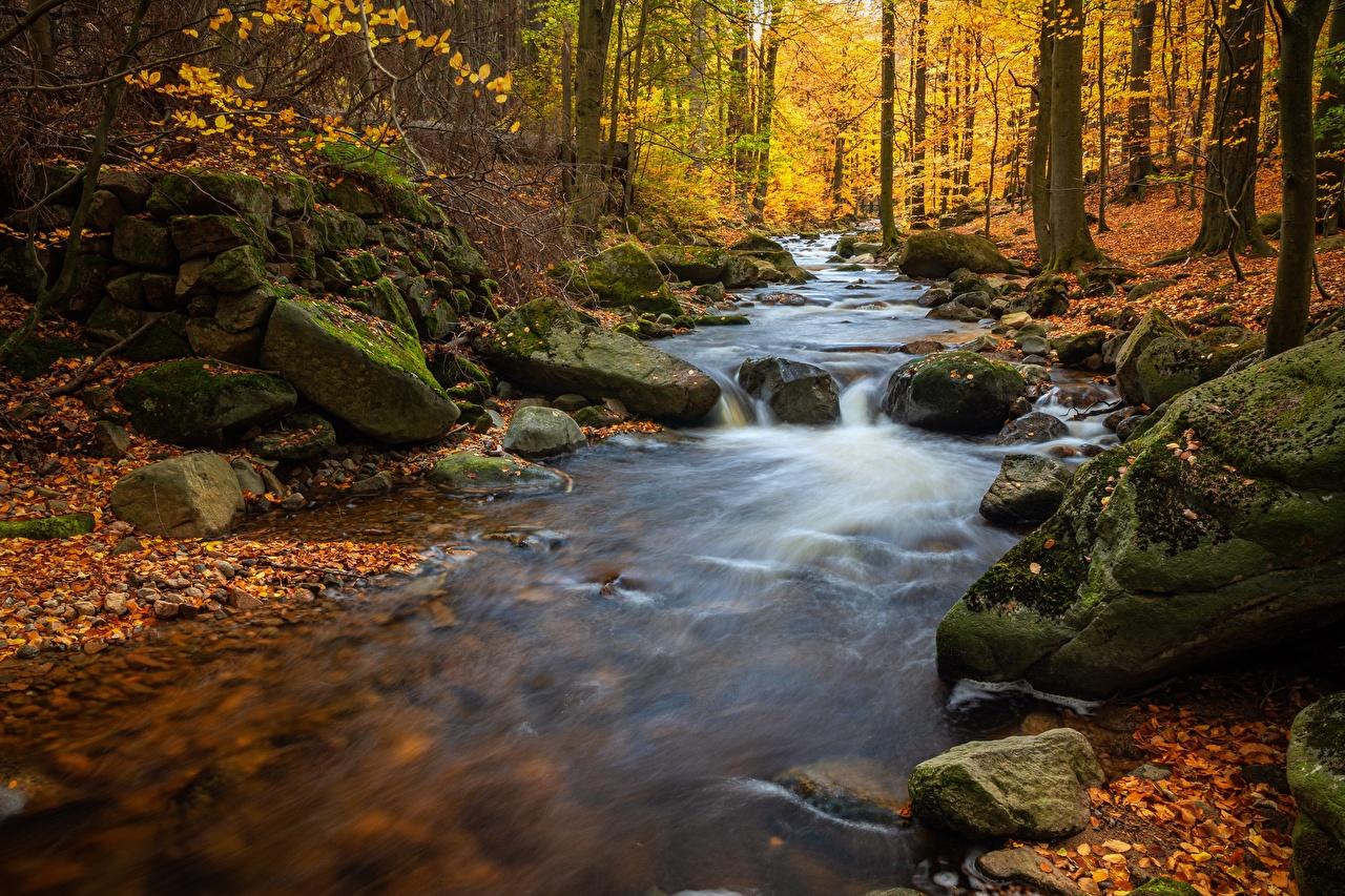 Картинка Листья Осень Природа мхом речка Камни лист Листва осенние мха Мох Реки река Камень
