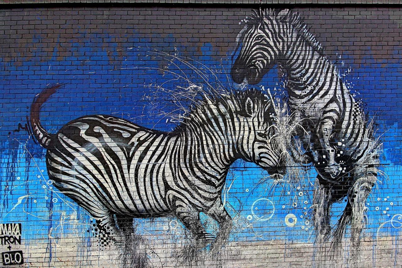 Фотография зебра два Граффити стены Животные Зебры 2 две Двое вдвоем стене Стена стенка животное