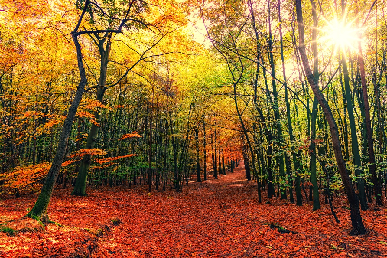 Фотография Лучи света Листья Осень Природа лес Деревья лист Листва осенние Леса дерево дерева деревьев