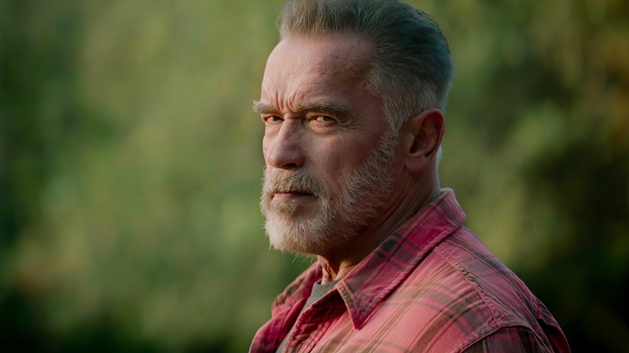 Фото Arnold Schwarzenegger Terminator: Dark Fate бородатые Фильмы Старый Голова смотрят Знаменитости Арнольд Шварценеггер Борода бородой бородатый кино старая старые головы Взгляд смотрит