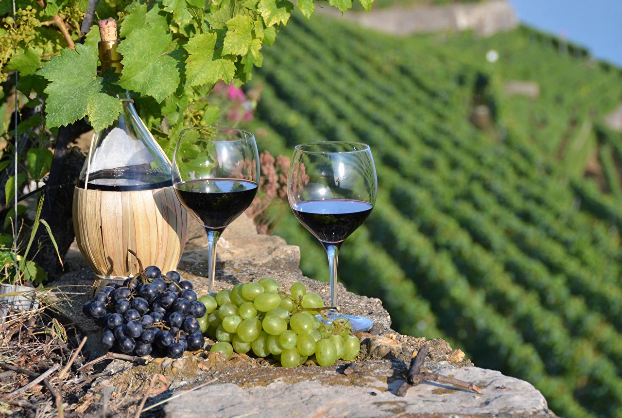 Фото Пища Вино Бокалы Виноград вдвоем бутылки Виноградник Еда Продукты питания бокал 2 две два Двое Бутылка