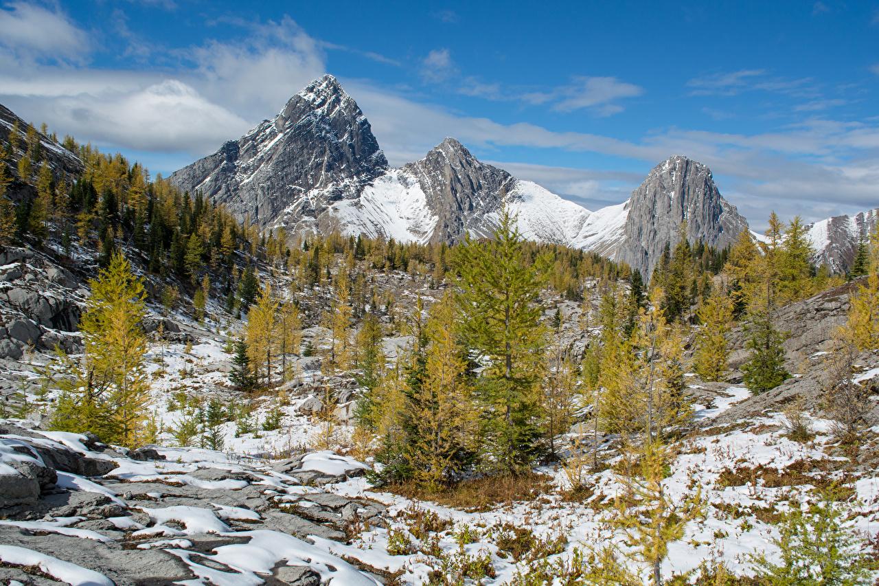 Фотографии Банф Канада ели Горы зимние Природа Снег Парки Ель Зима снеге снегу снега