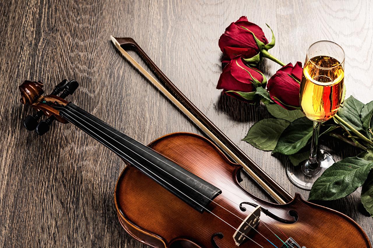 Картинки скрипка Розы Шампанское Цветы Еда Бокалы Скрипки роза Игристое вино цветок Пища бокал Продукты питания