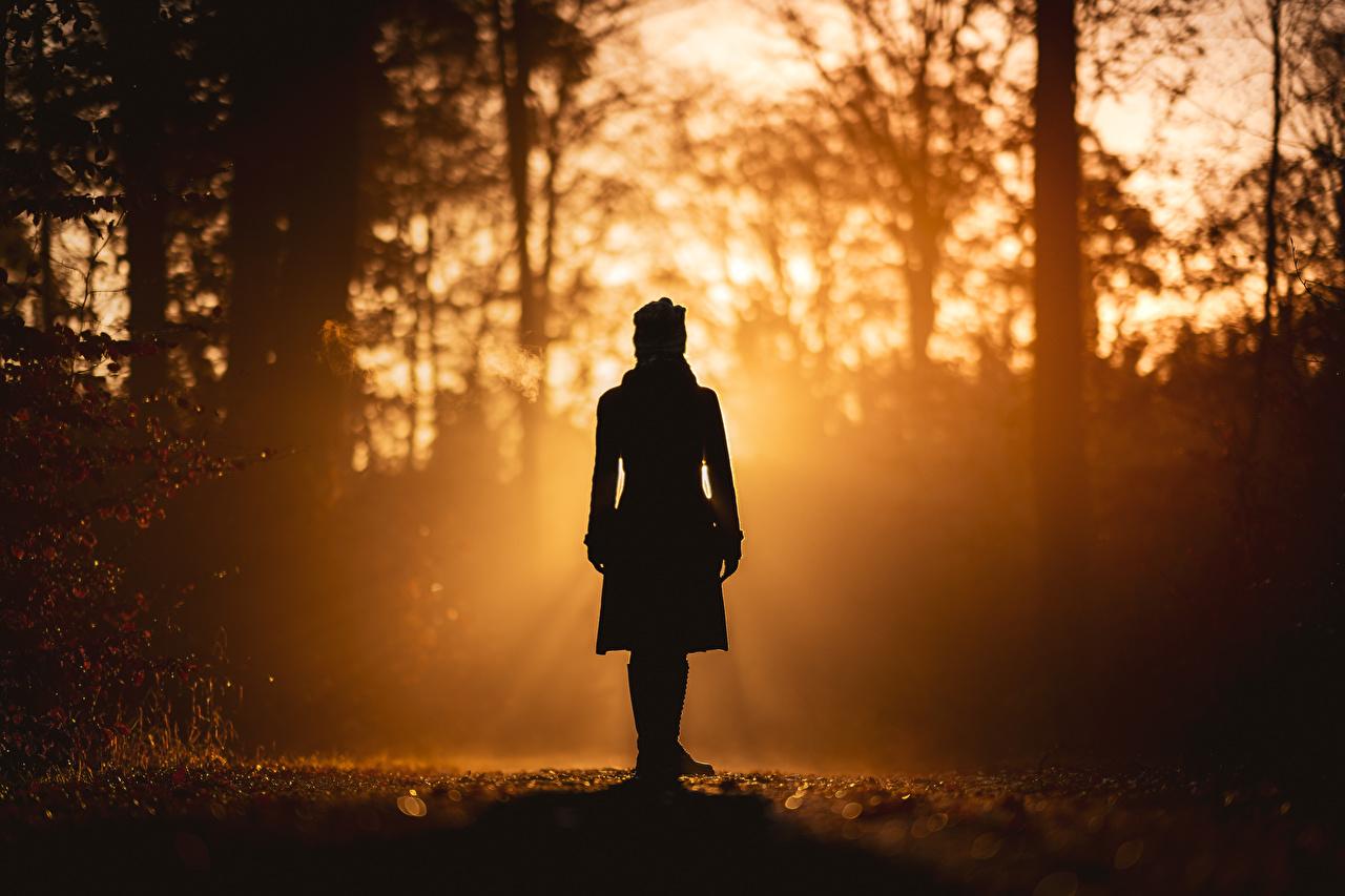 Фото силуэта Природа Девушки лес Утро дерево Силуэт силуэты девушка молодая женщина молодые женщины Леса дерева Деревья деревьев