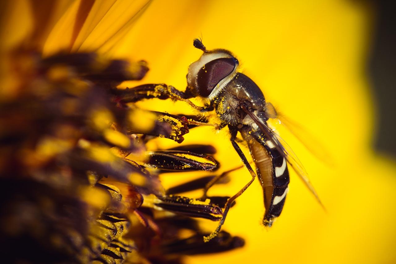 Обои для рабочего стола Мухи Насекомые Макро животное Крупным планом насекомое Макросъёмка вблизи Животные