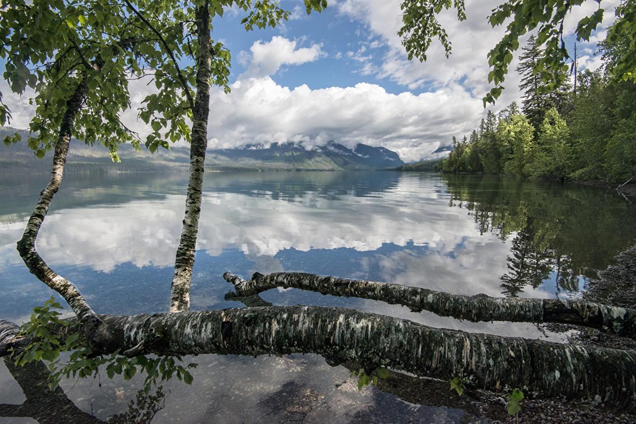 Фотография США Lake McDonald, Glacier National Park, Montana гора Березы Природа лес парк Озеро Отражение Ствол дерева штаты америка Горы береза Леса Парки отражении отражается