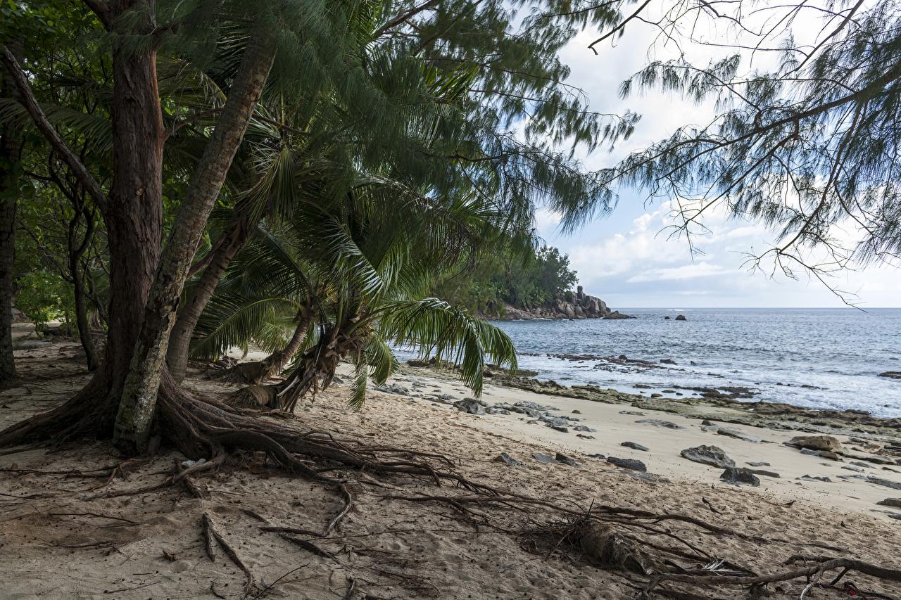 Картинка Police Beach Seychelles Пляж Природа Пальмы Тропики берег Побережье