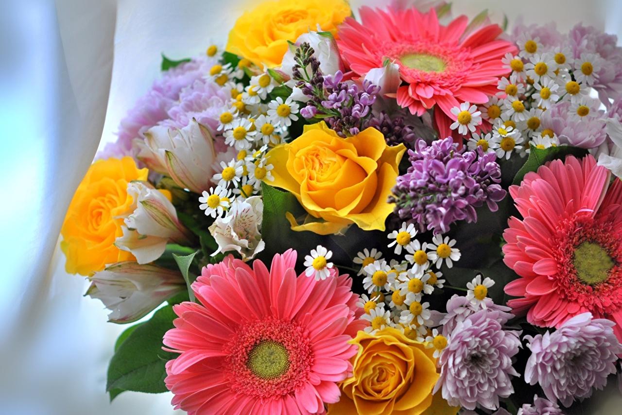 Фото Розы Герберы Цветы Сирень роза цветок