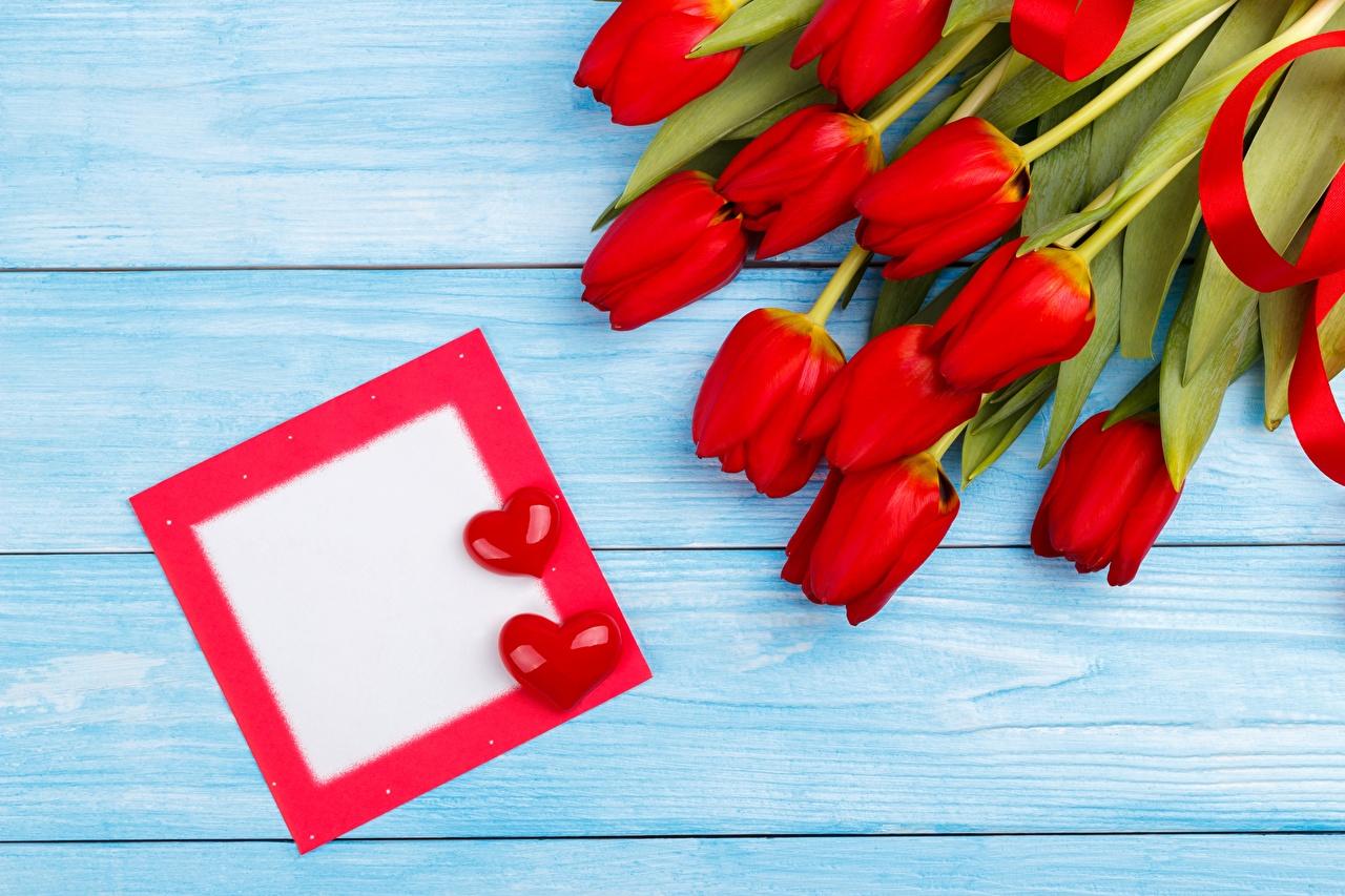 Фото День святого Валентина сердца Красный тюльпан Цветы Шаблон поздравительной открытки День всех влюблённых серце Сердце сердечко красных красные красная Тюльпаны цветок