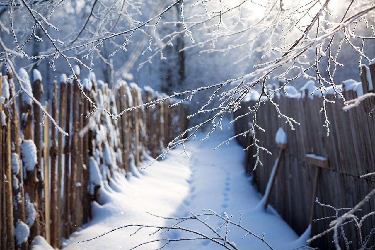 Фотографии Зима Природа Забор снегу на ветке зимние Снег снега снеге ограда забора забором Ветки ветка ветвь