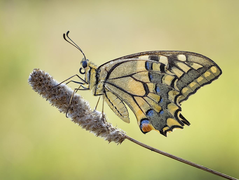 Картинки Бабочки Животные Крупным планом бабочка вблизи животное