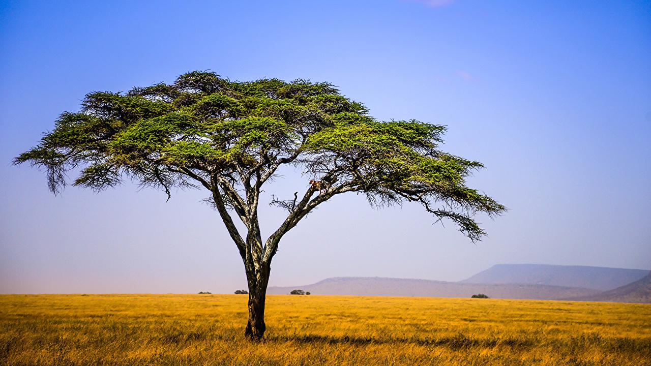 Обои для рабочего стола Африка Tanzania East Africa Природа Луга Небо Поля дерево дерева Деревья деревьев