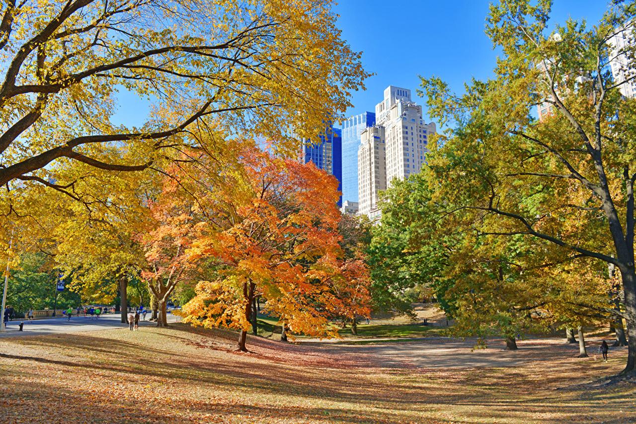 Фотографии Нью-Йорк США Листья Central Park Осень Природа парк деревьев лист штаты Листва америка осенние Парки дерево дерева Деревья