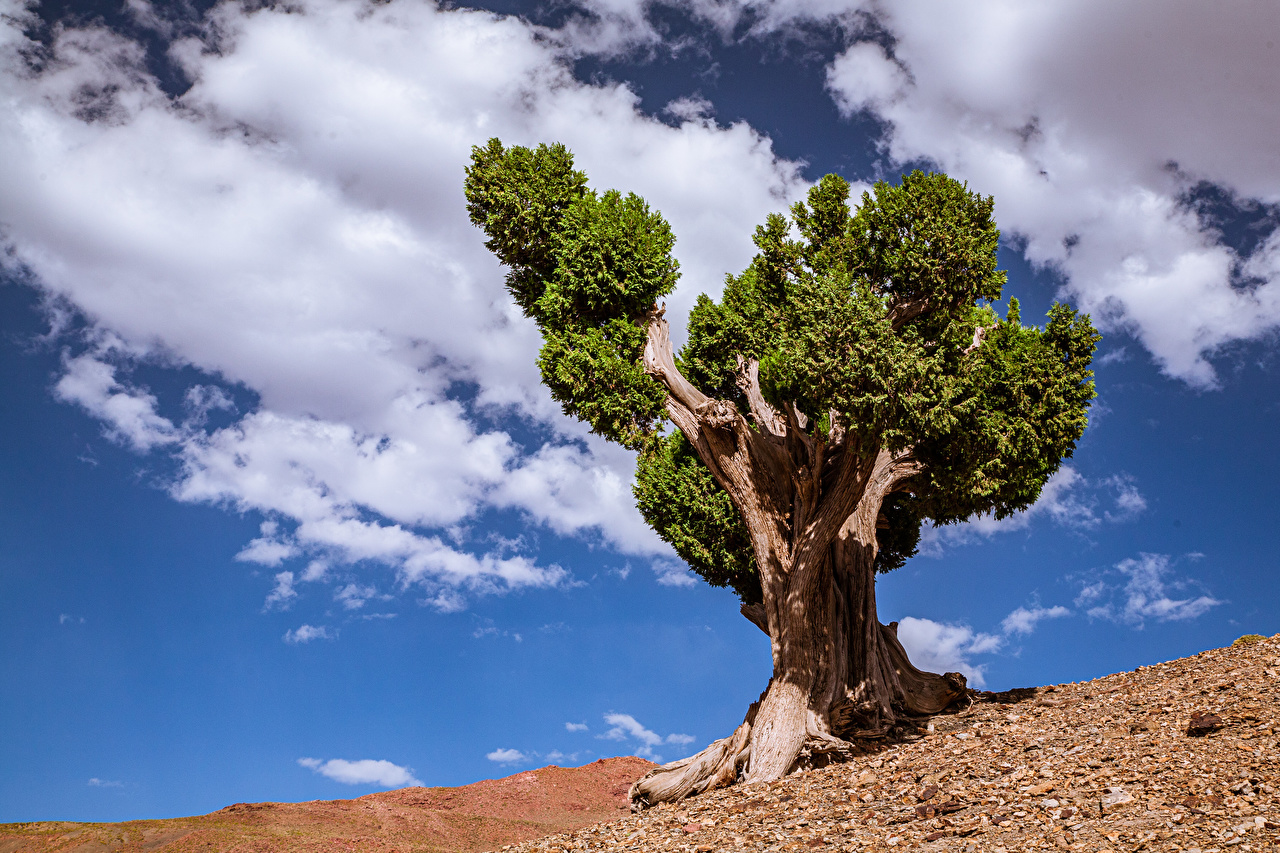Картинка Африка Марокко Tadla-Azilal Природа Небо Облака Деревья дерево облако дерева облачно деревьев