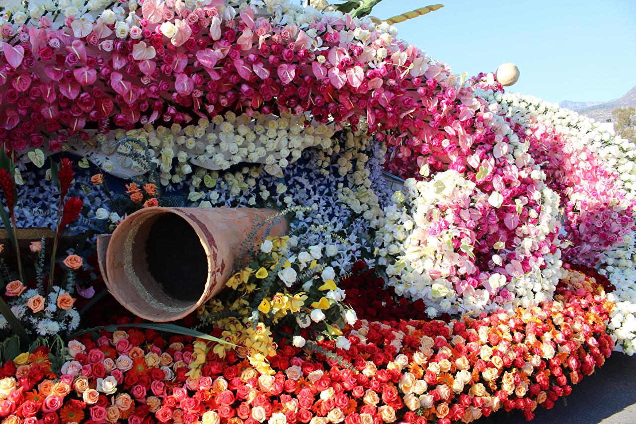 Фотография Калифорния америка Pasadena роза Орхидеи белокрыльник парк ирис Цветы дизайна калифорнии США штаты Розы Каллы орхидея Парки Ирисы цветок Дизайн