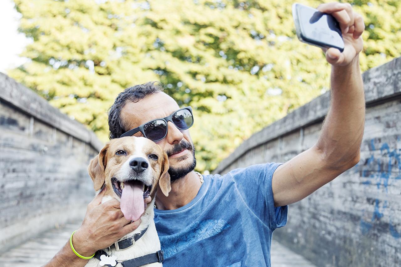 Фотографии Бигль Ретривер Собаки мужчина Селфи Смартфон языком очков животное бигля ретривера собака Мужчины смартфоны сматфоном Язык (анатомия) Очки очках Животные