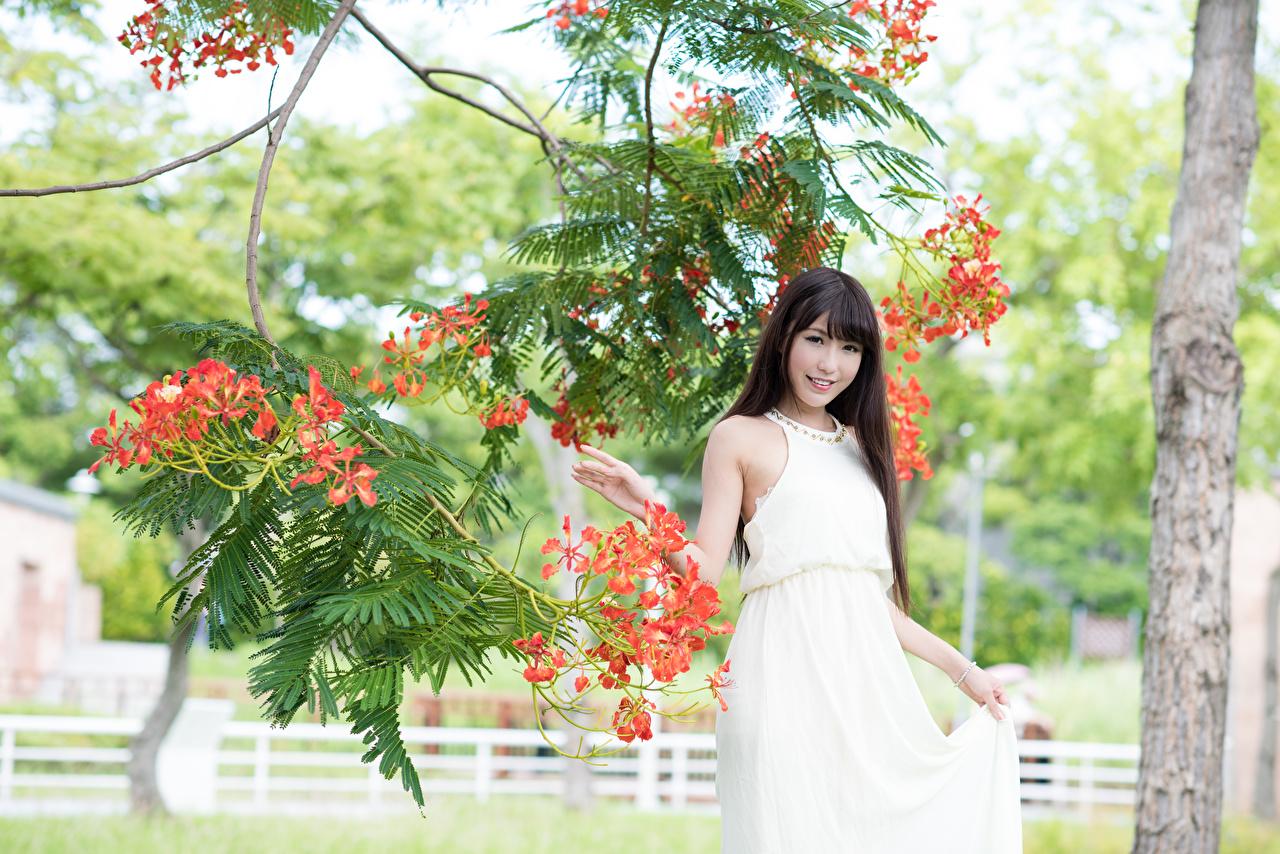 Фото Брюнетка Улыбка Девушки Азиаты ветвь платья брюнетки брюнеток улыбается девушка молодая женщина молодые женщины азиатки азиатка Ветки ветка на ветке Платье