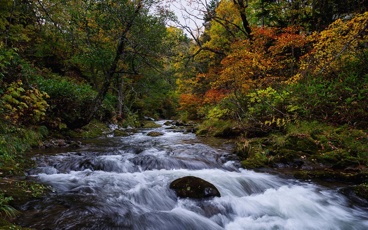Обои для рабочего стола Япония Hokkaido Осень Природа лес мха речка дерева осенние Леса Мох Реки река мхом дерево Деревья деревьев