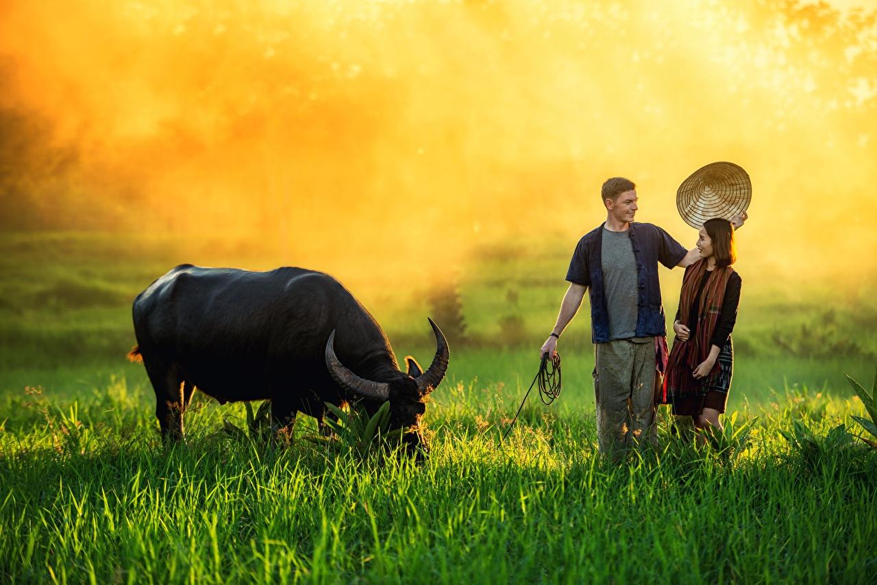Фотографии бык мужчина Рога Туман Шляпа Девушки Азиаты траве Животные Быки Мужчины с рогами тумана тумане шляпе шляпы девушка молодые женщины молодая женщина азиатка азиатки Трава животное