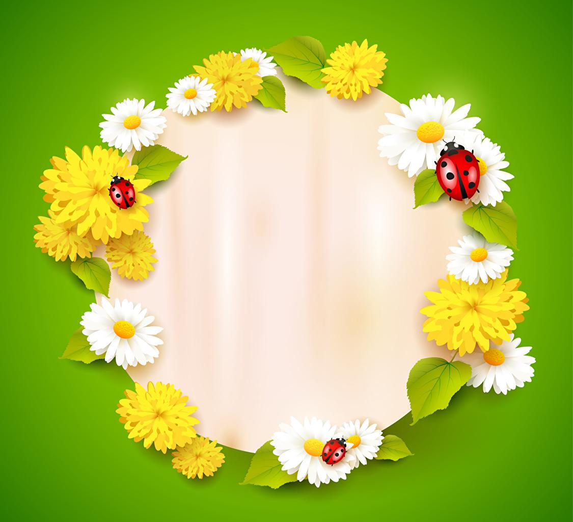 Обои для рабочего стола Божьи коровки цветок ромашка Одуванчики Шаблон поздравительной открытки Цветной фон Цветы Ромашки