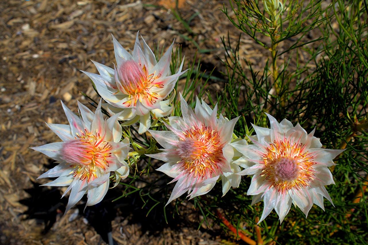 Картинка Размытый фон Цветы вблизи боке цветок Крупным планом
