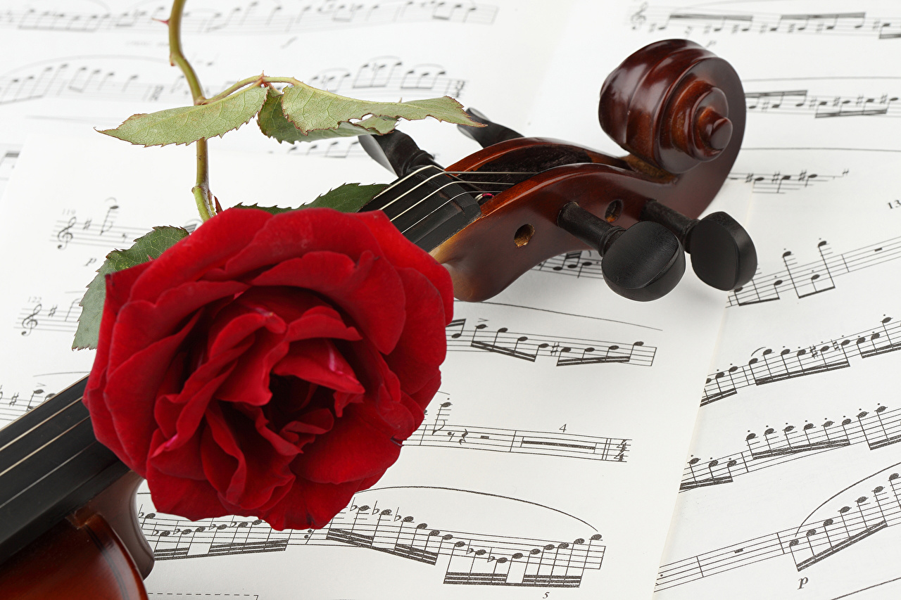 Картинка скрипка Ноты Розы Красный цветок вблизи Скрипки роза красная красные красных Цветы Крупным планом