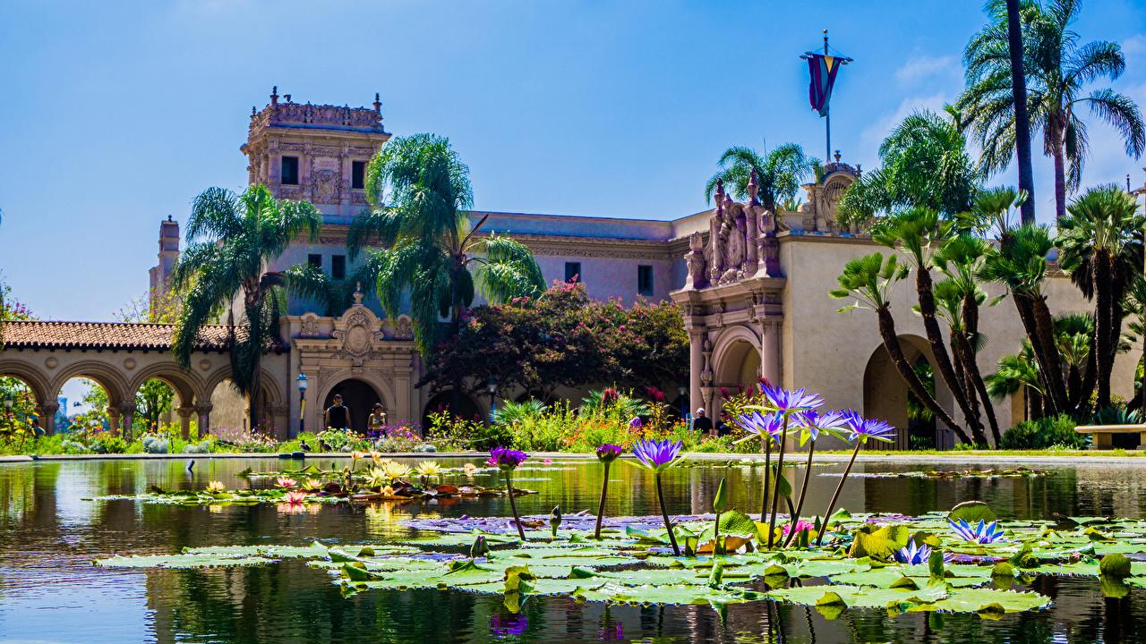 Картинки Сан-Диего штаты Balboa Park Природа Пруд Парки Пальмы Кувшинки Дома США Водяные лилии Здания