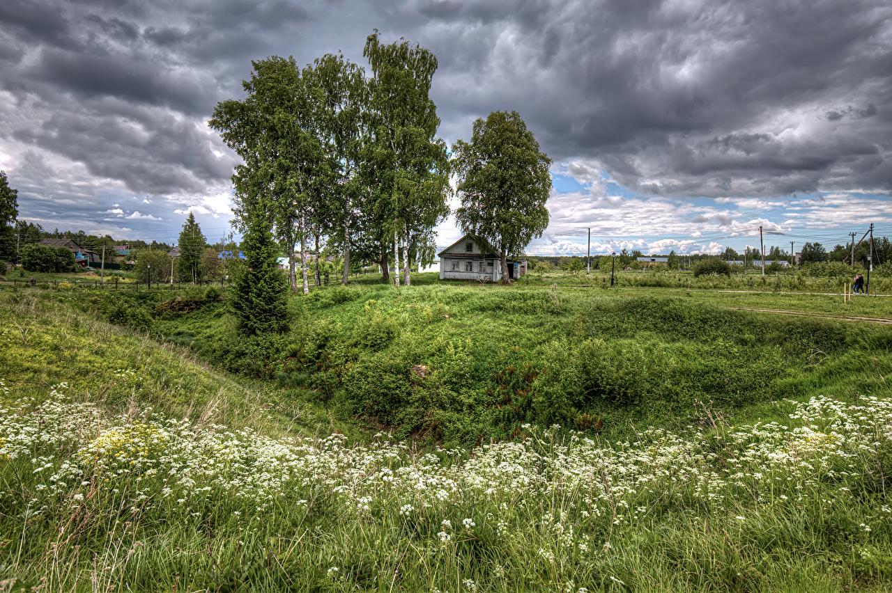 Обои Россия Star. Sloboda Leningrad Oblast Природа Трава Облака Деревья