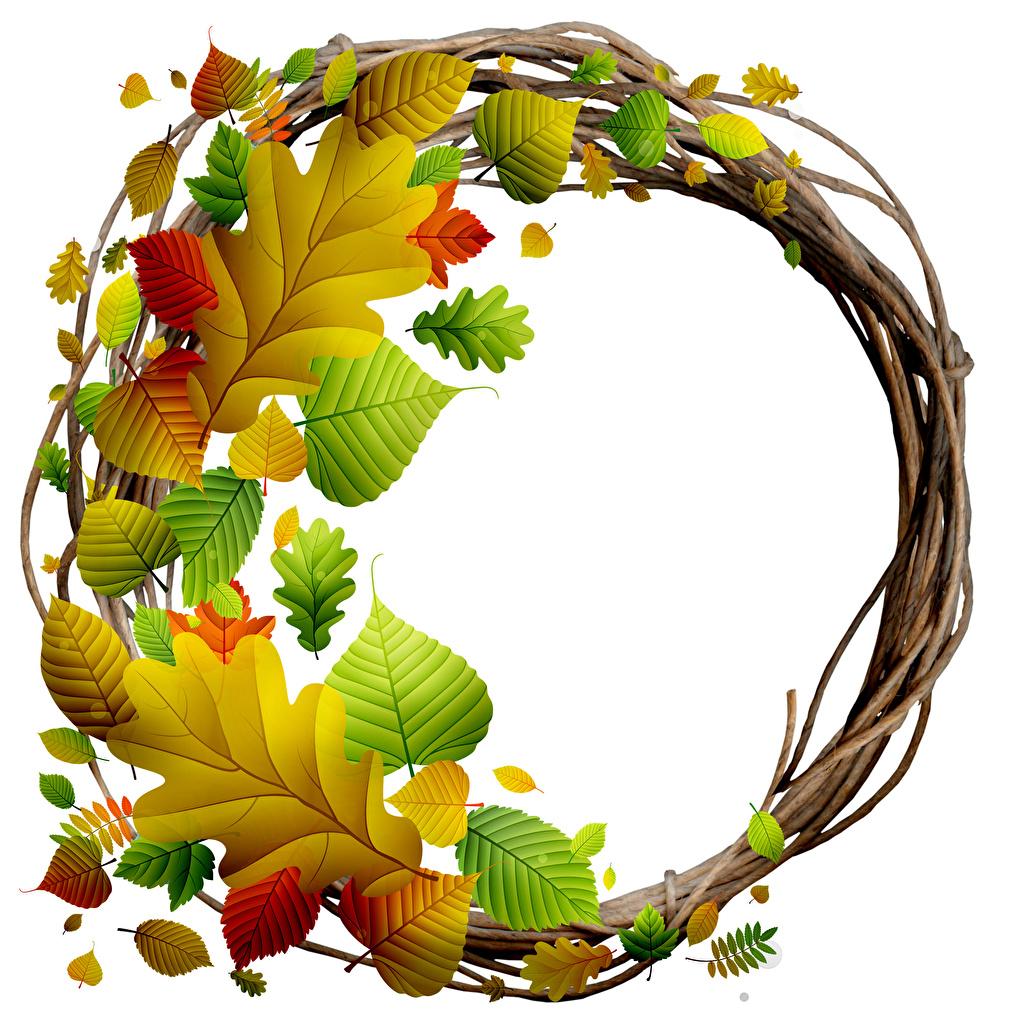 Фотографии Листва Венок осенние Природа Шаблон поздравительной открытки Белый фон лист Листья Осень венком белом фоне белым фоном