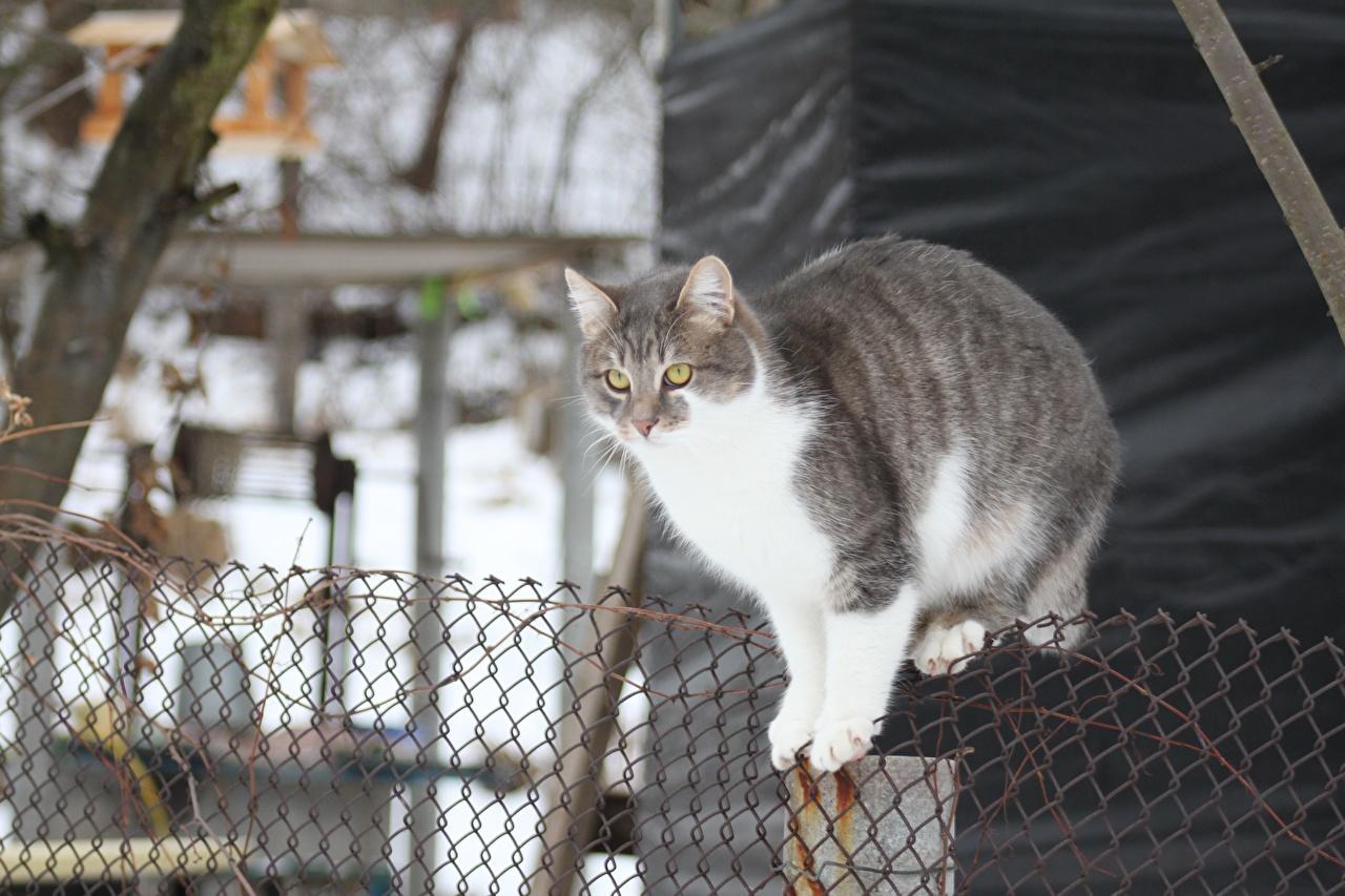 Картинки Коты Забор Животные Кошки ограда забора забором