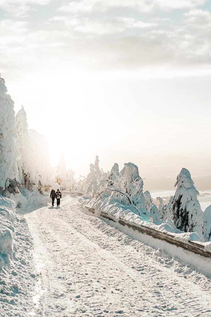 Фото Двое зимние гуляет Природа Снег Дороги дерева  для мобильного телефона 2 два две Зима идет вдвоем ходьба Прогулка снега снегу снеге дерево Деревья деревьев
