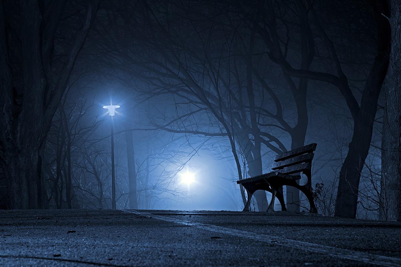 Фото Туман парк ночью Скамейка Уличные фонари Города деревьев тумана тумане Парки Ночь в ночи Скамья Ночные город дерева дерево Деревья