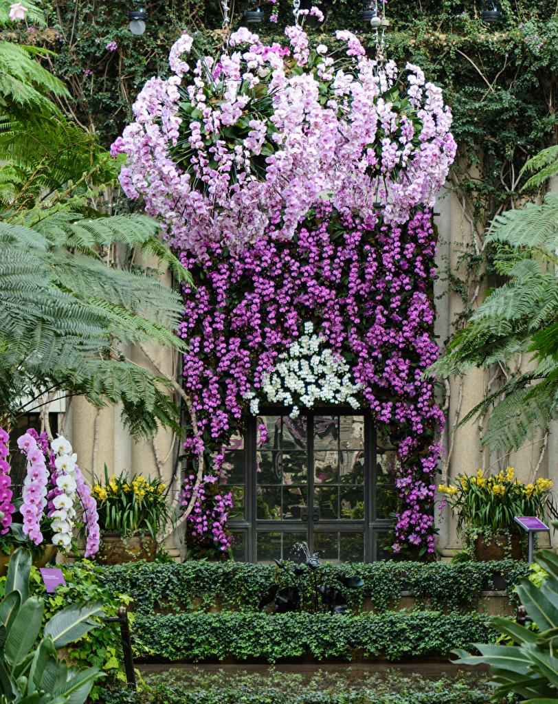 Фотография США Longwood Gardens Природа Орхидеи Сады Дверь штаты двери