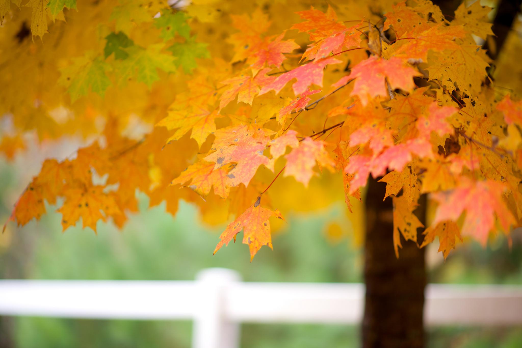 осень листья дерево autumn leaves tree загрузить