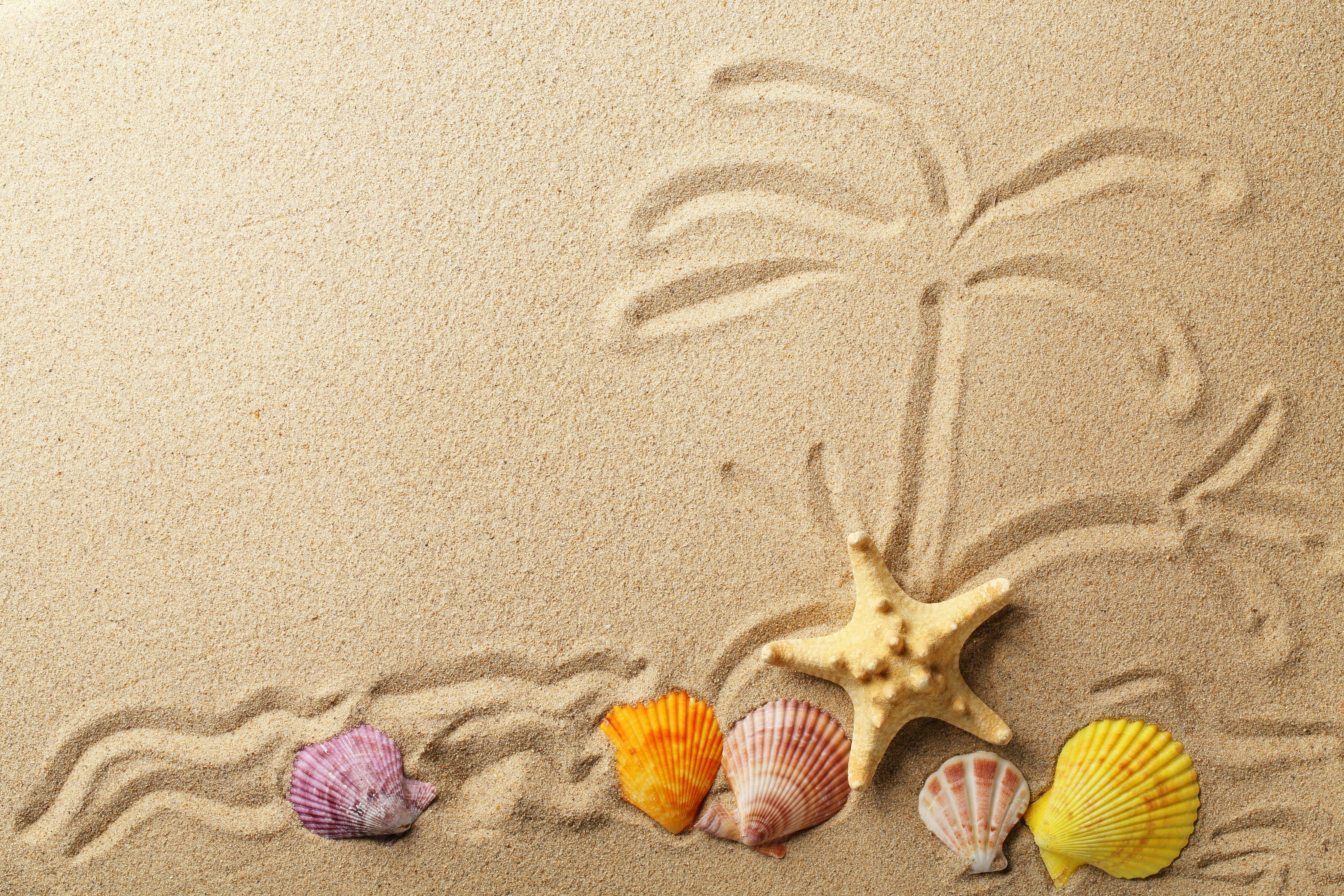 Картинки Морские звезды песка Ракушки Песок песке