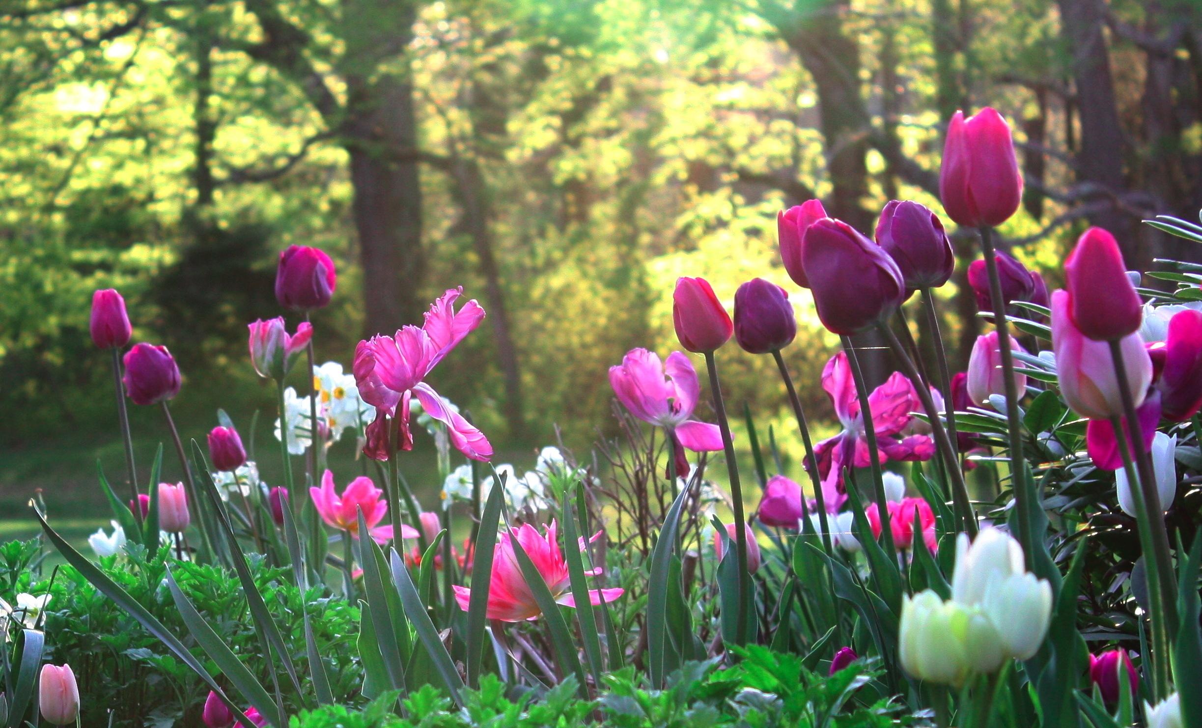 цветы поляна без смс