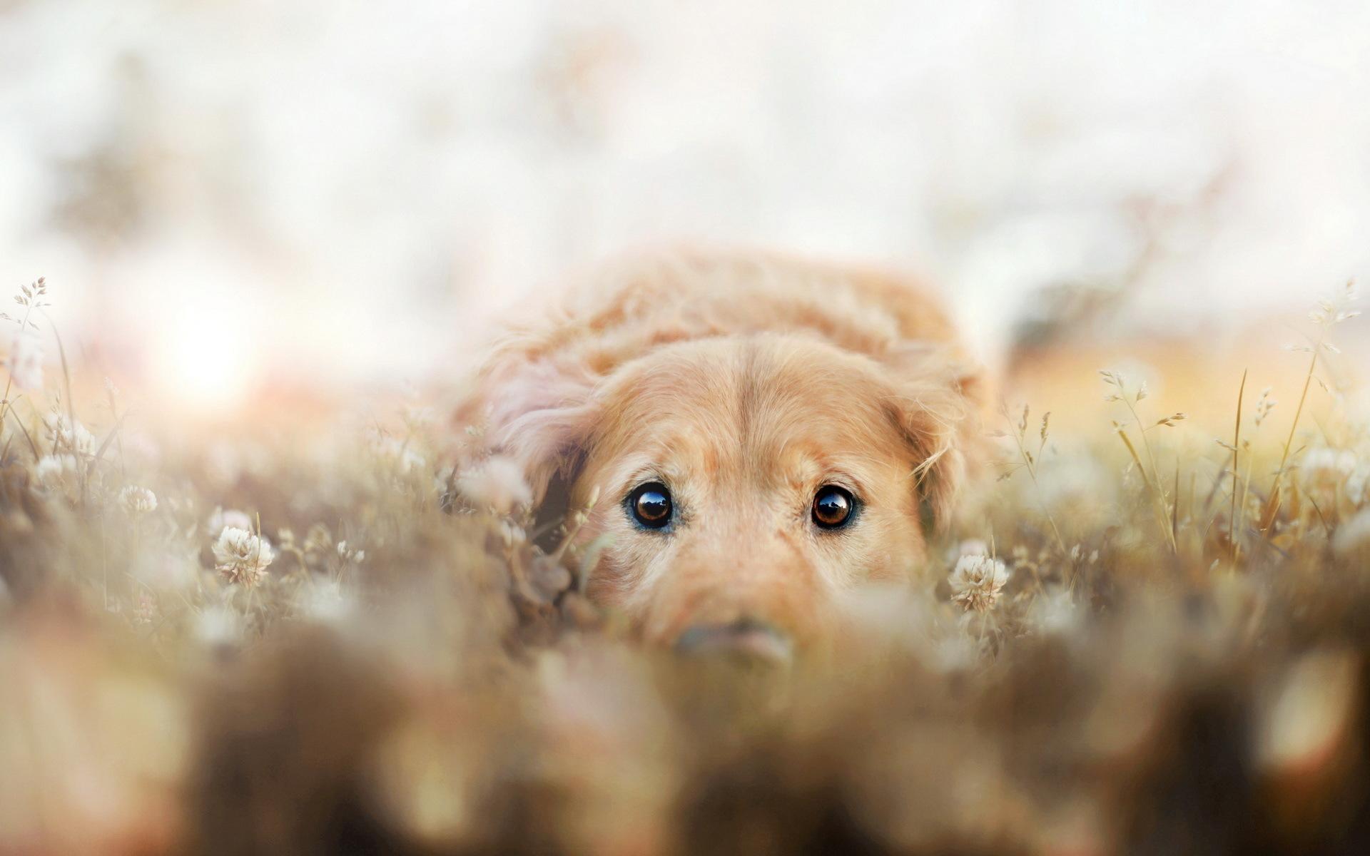 природа животные собака голова бесплатно