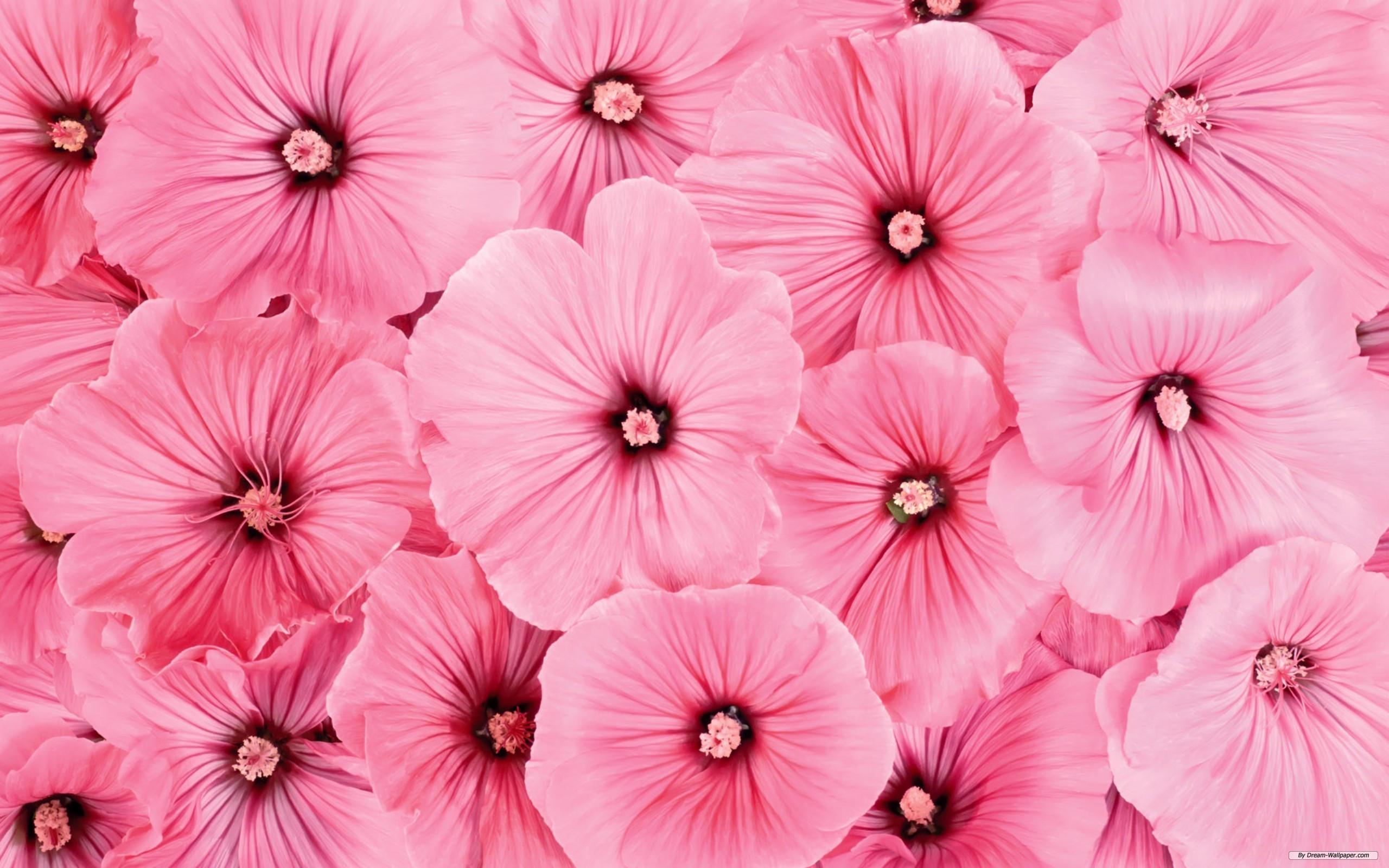 цветы розовые flowers pink скачать