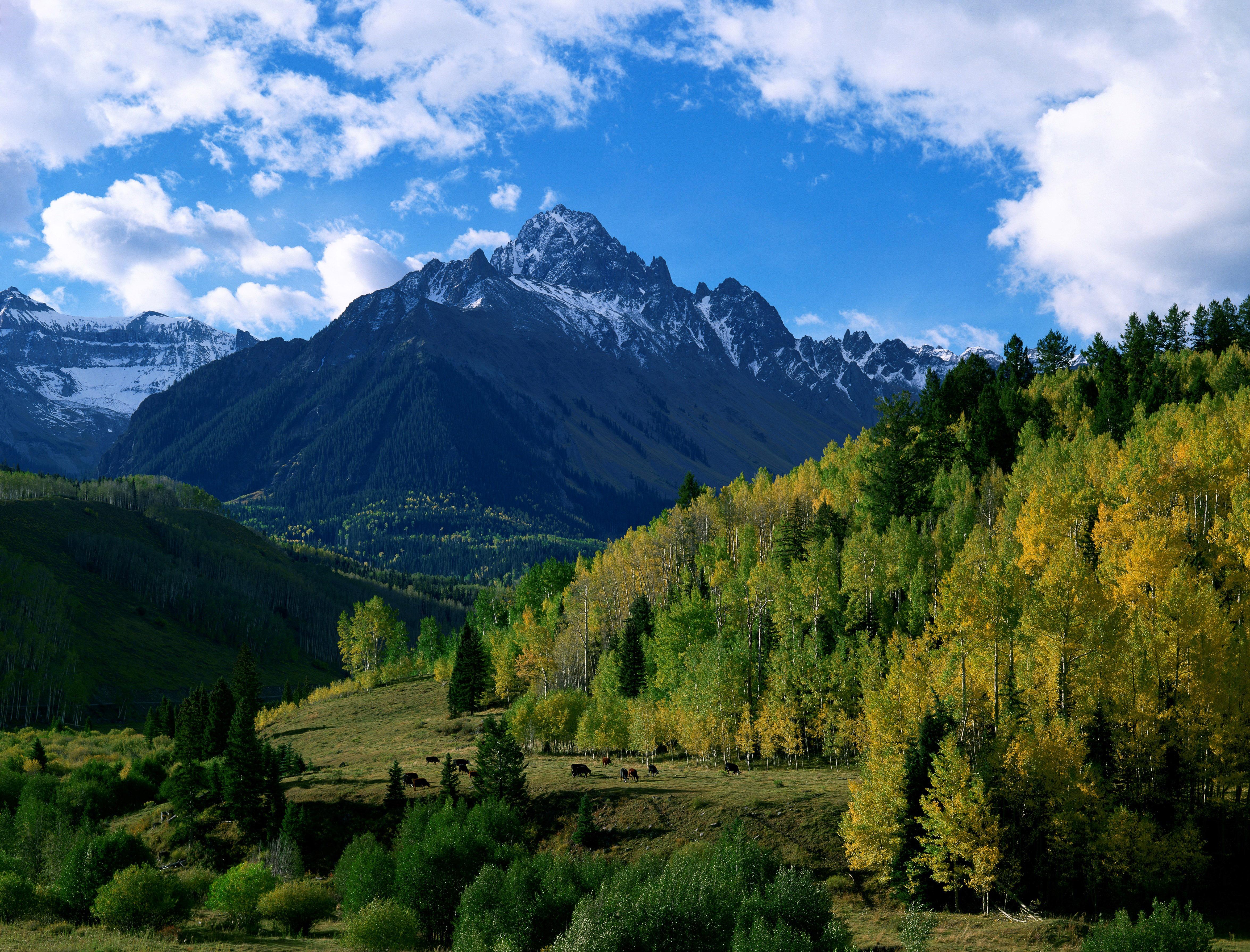 горы, лес, деревья бесплатно