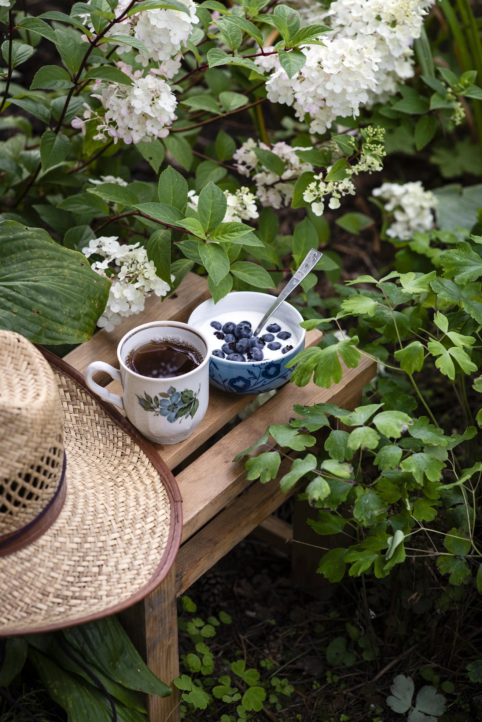 Картинка Чай Йогурт Миска Черника Еда Ветки Чашка  для мобильного телефона Пища ветвь ветка чашке на ветке Продукты питания