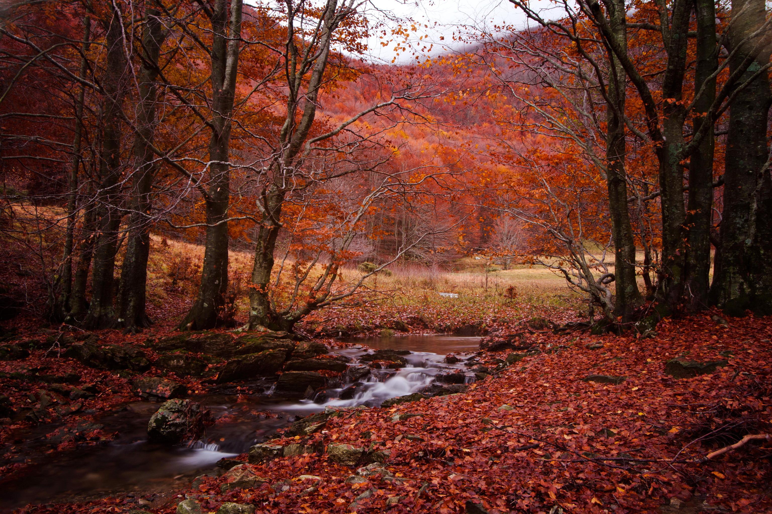 природа река листья осень лес деревья скачать