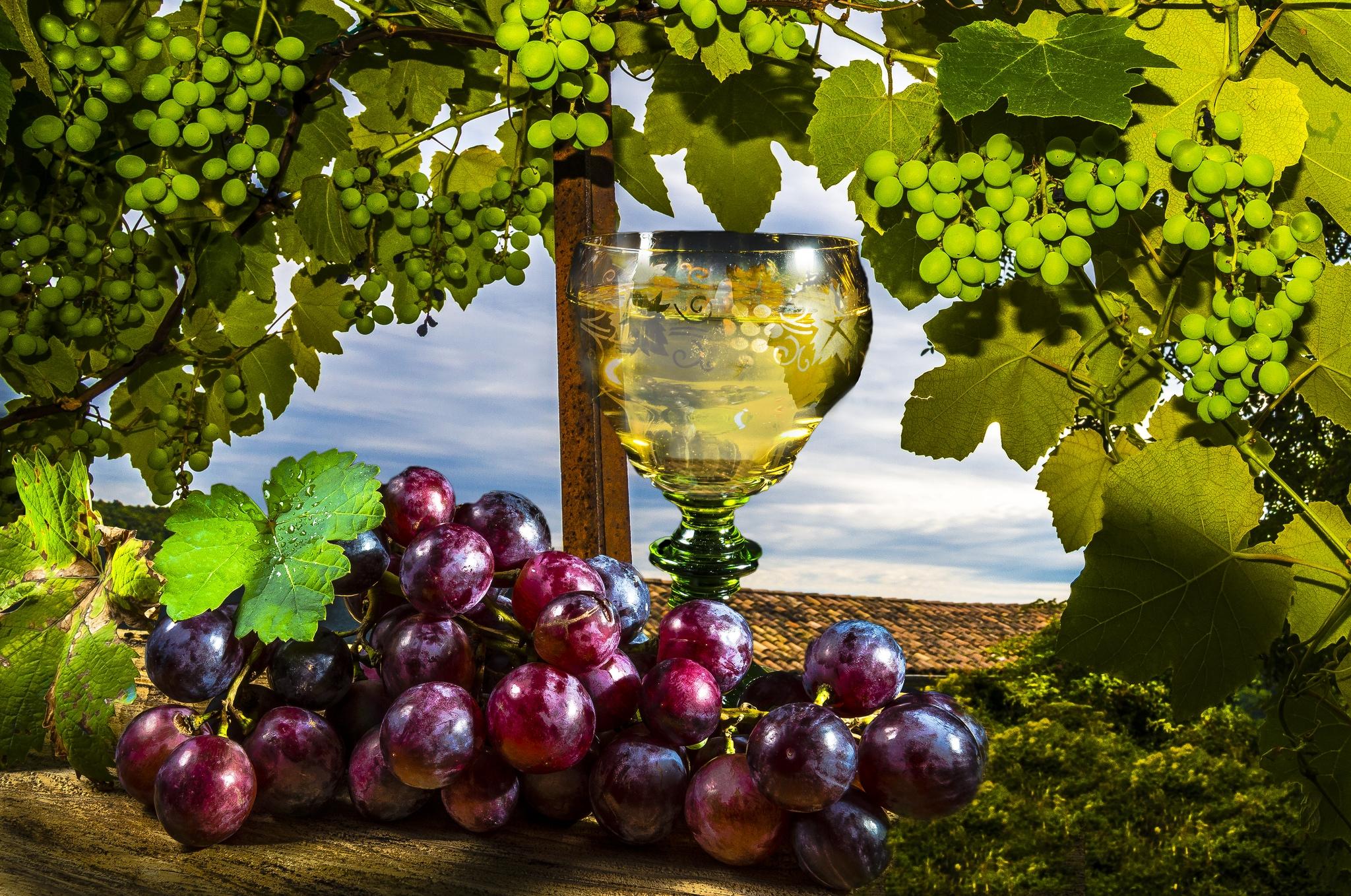Вино, бокал виноград без смс