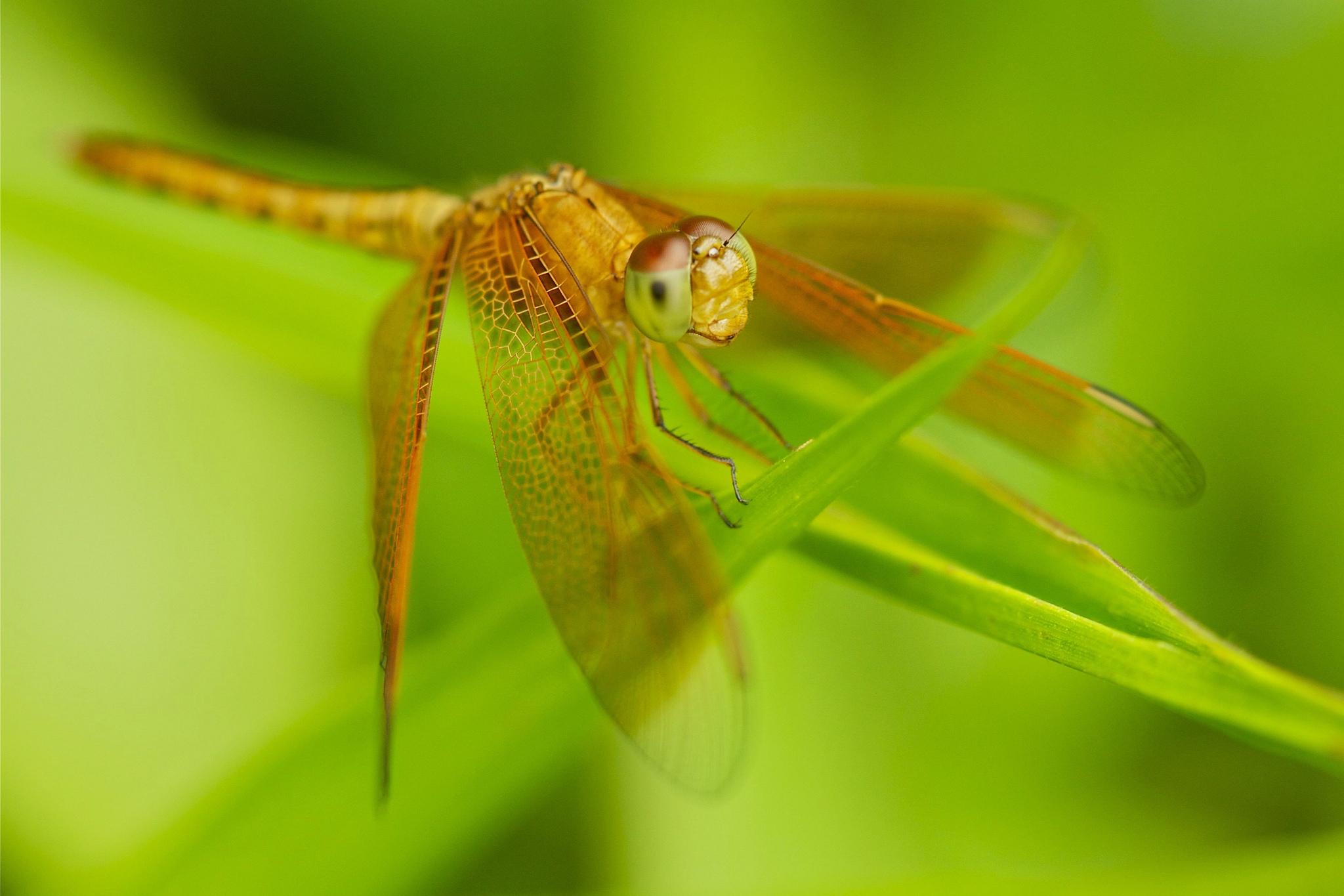 природа животные макро стрекоза трава скачать