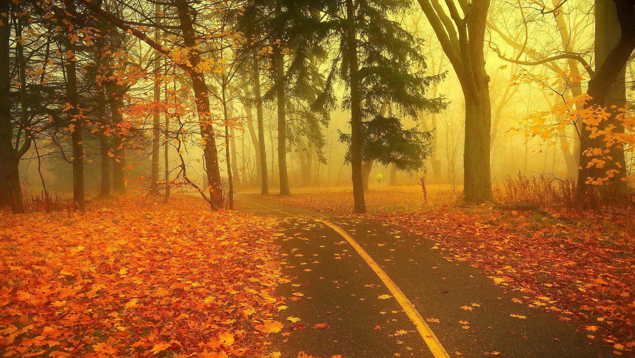 осень листья дорога загрузить