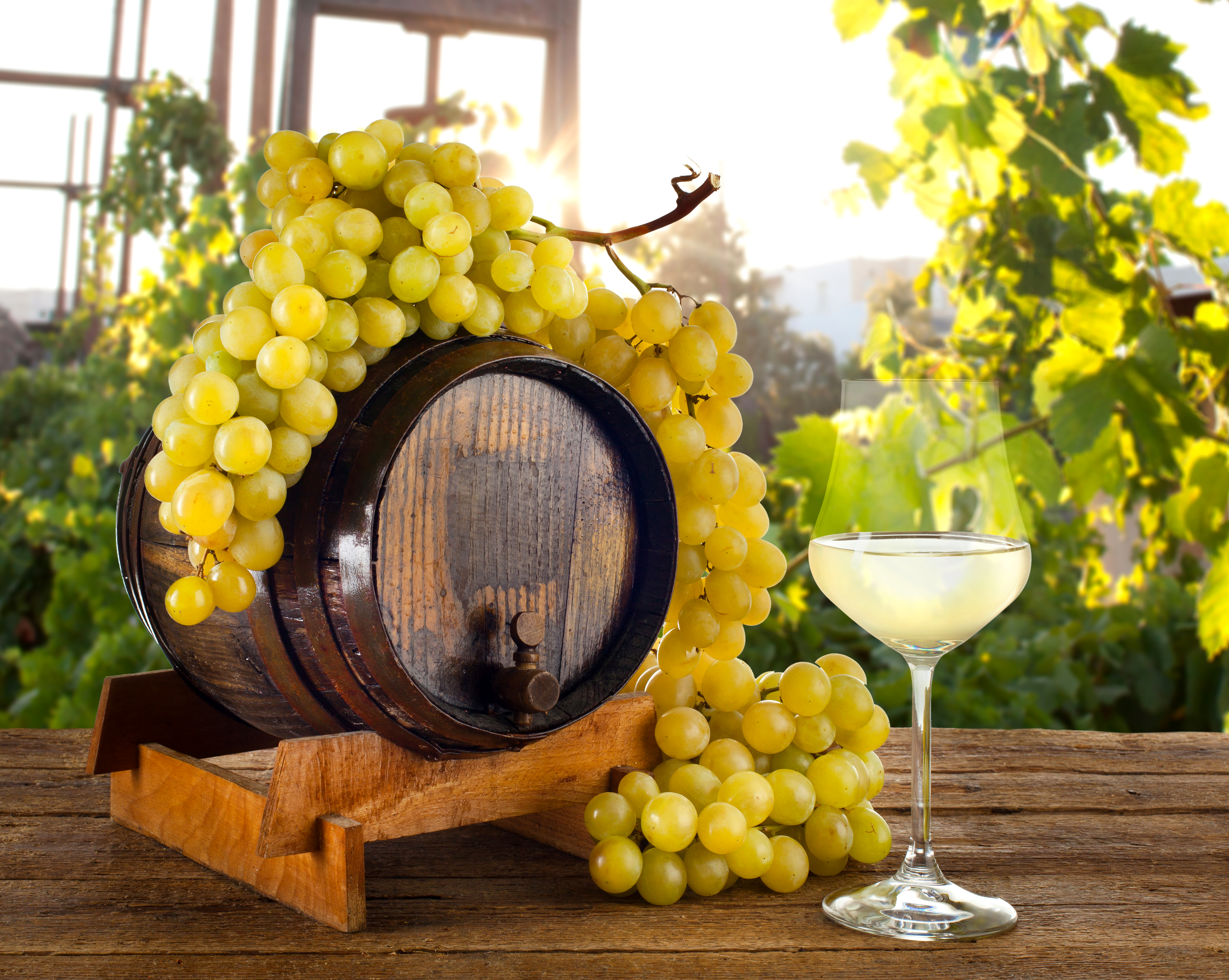 Вино виноград бочка без смс