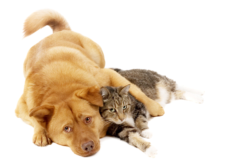 Чему собаки и к снятся животные кошки