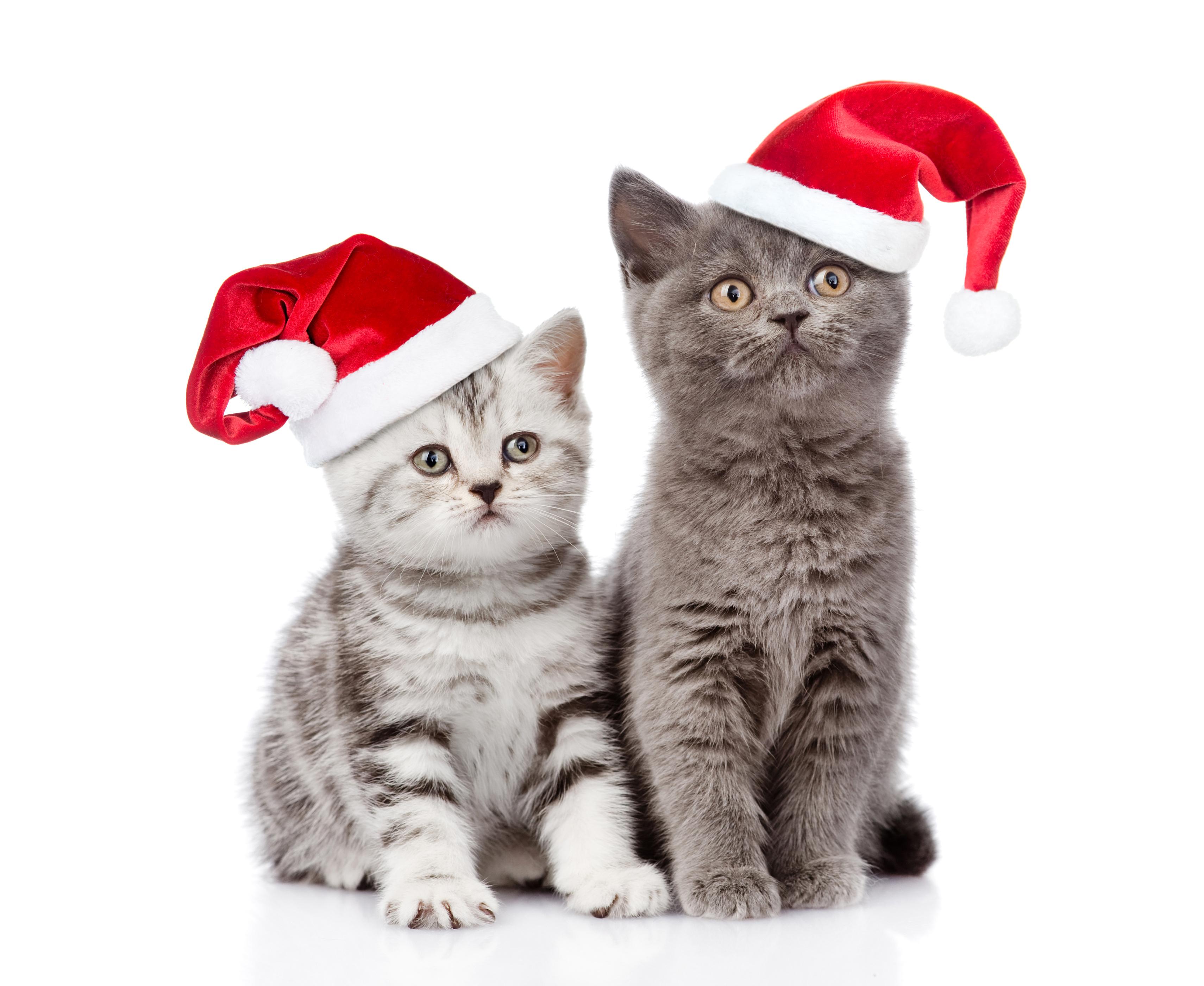 кот шапочка праздник бесплатно