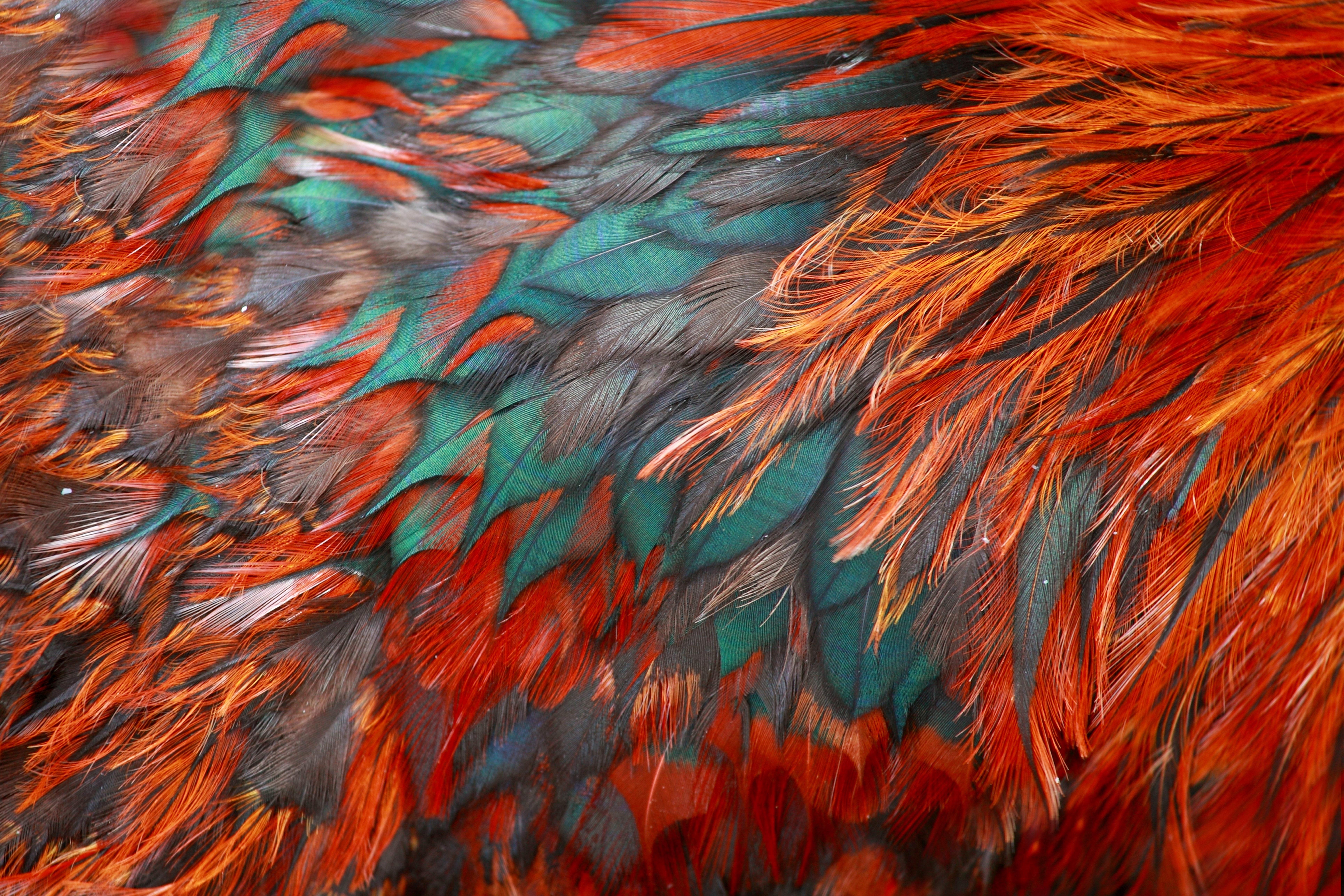 https://s1.1zoom.ru/big3/155/Feathers_Texture_Closeup_460633.jpg
