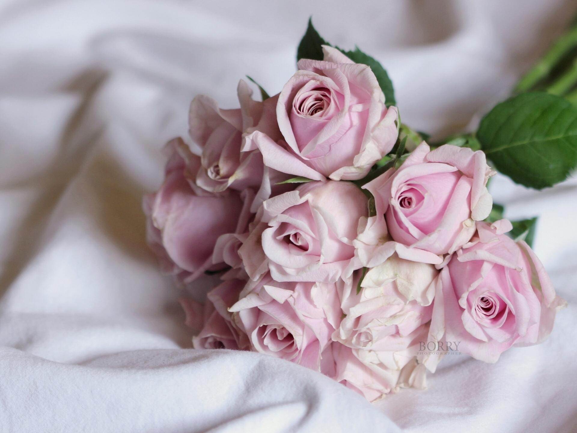 нежная роза загрузить