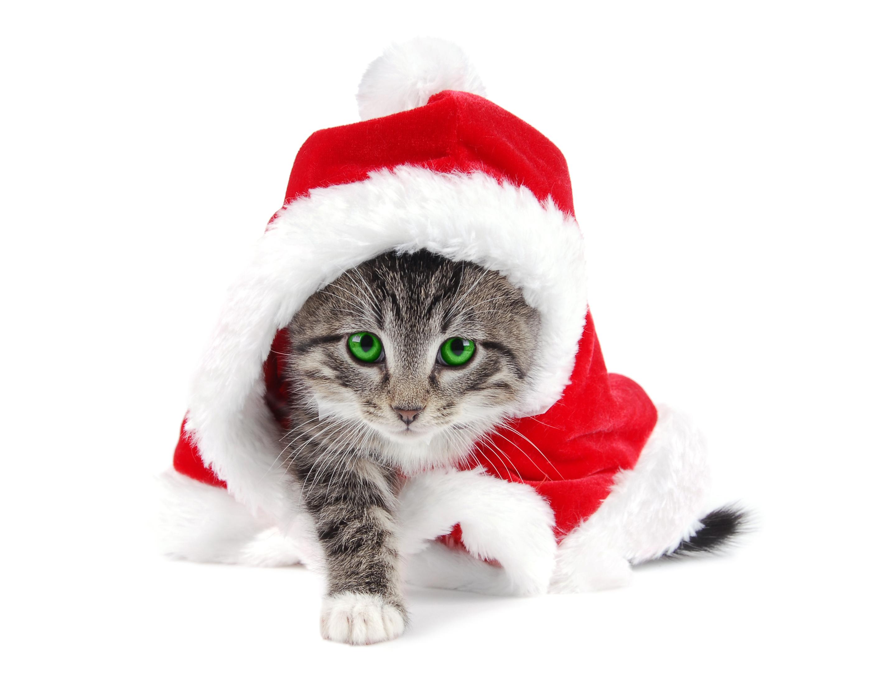 кот шапочка праздник загрузить